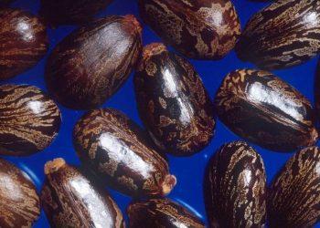 Castor beans 770x433 350x250 - R Quant Futures News